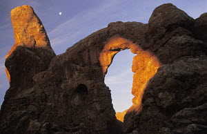 Sandstone archway of Turret Arch at sunrise, with the moon behind. Arches National Park, Utah, USA. Here the sun is shining onto the arch through North Window. - Ian Cameron