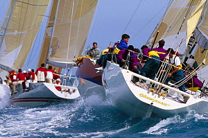 Champosa and others racing upwind, Key West Race Week, Florida, USA.  -  Onne van der Wal