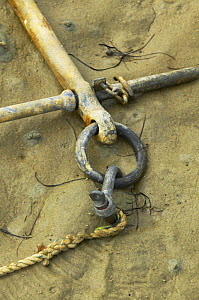 A fisherman's anchor lying in the sand, South Island, New Zealand. - Onne van der Wal