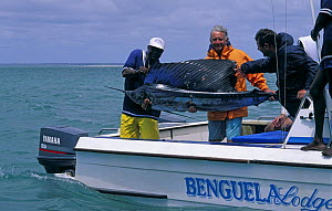 A tourist with his catch of the day, a swordfish (Xiphias gladius), Benguerra Island, Mozambique  -  Roberto Rinaldi