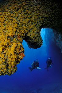 Two divers at the entrance of Grotta della Madonnina (The cave of the small Madonna), Sardinia. The walls in the entrance are completely covered with orange Asteroides Calycularis. Model released.  -  Roberto Rinaldi