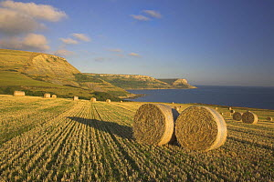 Round hay bales in a field below Houns-tout cliff, looking towards St Albans Head in the distance, Dorset. Jurassic Coast World Heritage Site. September 2006.  -  Peter Lewis