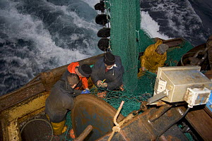 Fishermen repairing torn nets after snagging a seabed obstruction in the North Sea, August 2006. - Philip Stephen