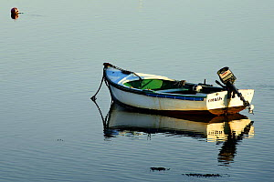Wooden tender tied to a buoy in the calm waters of Locmariaquer, Morbihan, Brittany, France.  -  Marc Robillard