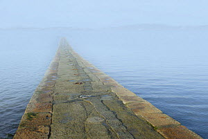 Low tide over Br�hat Island's Pointe de l'Arcouest pier, Armor Coast, Brittany, France. The pier leads to Br�hat Island, just visible through the mist.  -  Marc Robillard