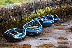Four blue fishing boats tied to the harbour wall at low tide in a small harbour in Connemara, Ireland.  -  Marc Robillard