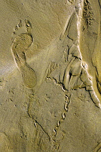 Human footprint, and tracks of bird and worm activity in sand  -  Marc Robillard