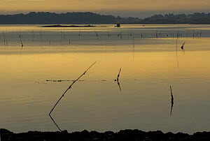 Sunrise over the Gulf of Morbihan, Southern Brittany, France.  -  Marc Robillard