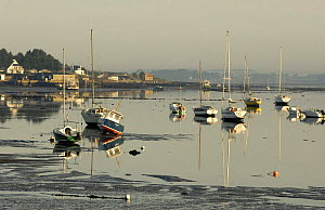 Boats on the mud at low tide in Locmariaquer harbours, Gulf of Morbihan, Brittany, France.  -  Marc Robillard
