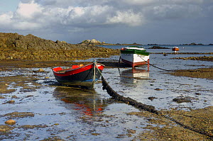 Two wooden boats on the riverbed in the morning, at low tide near Paimpol, Brittany, France.  -  Marc Robillard