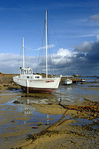 Wooden boats on the riverbed in the morning, at low tide near Paimpol, Brittany, France.  -  Marc Robillard