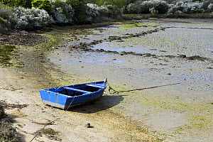 Blue tender on the sand at low tide in the natural harbour of Saint Cado, Morbihan, Brittany, France.  -  Marc Robillard