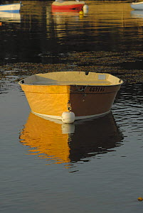 Orange tender moored in the still waters of Locmariaquer harbours, Morbihan, Brittany, France.  -  Marc Robillard