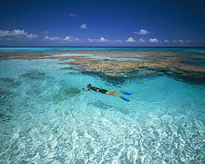 Snorkeler over a coral reef in Rangiroa, French Polynesia.  -  Onne van der Wal