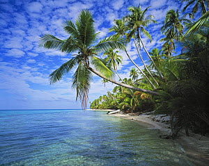 Palm tree lined beach with a tender on the shore, Rangiroa, French Polynesia.  -  Onne van der Wal
