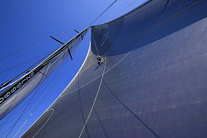 """A crew member of """"Maximus"""" going up the rigging to check out the sails during the 2006 Newport to Bermuda Race. - Onne van der Wal"""