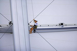 Crew member up the mast of the megayacht ^Maltese Falcon^ during the St Barth's Bucket 2007, St Barthelemy, Caribbean. Property released.  -  Onne van der Wal