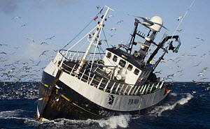 Fishing vessel hauling its net, surrounded by seabirds, in the North Sea. August 2007.  -  Philip Stephen