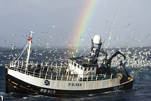 Fishing vessel hauling its net, surrounded by seabirds, in the North Sea, with a rainbow in the background. August 2007. - Philip Stephen