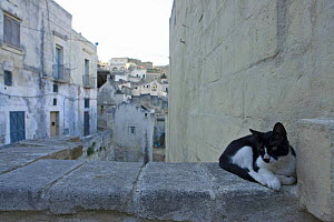 """Cat lying on the old walls in the ancient town """"I sassi di Matera"""", Basilicata, Italy.  -  Angelo Giampiccolo"""