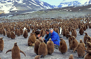 Producer Alastair Fothergill, cameraman Paul Atkins and presenter David Attenborough in king penguin colony on location for BBC Life in the Freezer, South Georgia 1992 - Ben Osborne