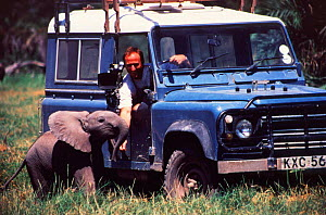 Camerman Martyn Colbeck and elephant calf Ebony, daughter of Echo, on location for BBC programme Echo the Elephant, 1995  -  Cynthia Moss