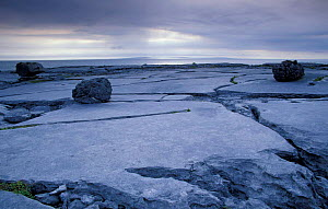 Limestone pavement, The Burren NP, County Clare, Republic of Ireland  -  Tim Edwards