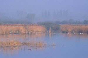 Early morning view across fen with open water Strumpshaw Fen RSPB Reserve Norfolk UK with  -  Nick Barwick