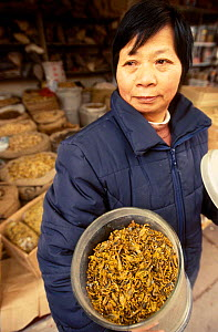 Dried scorpions for sale for medicinal use Yunnan China - Pete Oxford