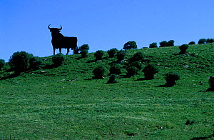 Bull silhouetted on skyline Tarifa Cadiz Spain  -  Jose B. Ruiz