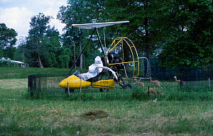 Researcher in microlite in crane costume with Whooping crane chicks. Maryland USA Operation - imprinting chicks so they will follow microlite south for winter - Mark Payne-Gill