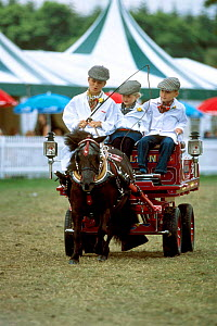 Shetland pony pulling light trade cart. New Forest show Hampshire UK  -  Colin Seddon