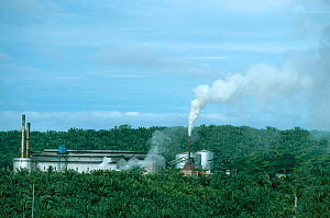 Pollution from Oil palm factory in plantation. Sabah Malaysia Indonesia. Smoke pollutes large - Georgette Douwma