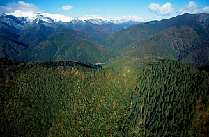 Aerial looking down onto mixed Beech forest Carpathian Mountains Romania 10/99 - Nick Turner