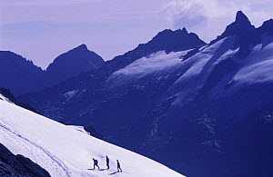 Climbers in snow on slopes of Margherita peak Mountains of the Moon Virunga NP DR of Congo  -  Jabruson
