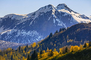 Taiga and snow-covered mountains in autumn, Glacier Bay National Park, Alaska  -  Andrew Peacock / Minden
