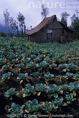 Nature Picture Library - Farm building in Bromo-Tengger