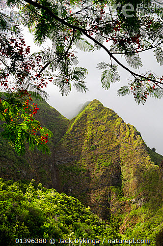 Nature Picture Library Iao Valley State Park With Flowering