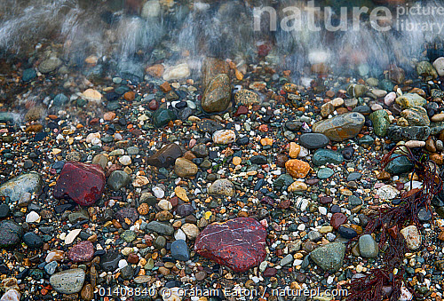 Pebbles Of Semi Precious Jasper Quartz Sio2 In Shingle On A Beach Aberdaron Wales The Jasper Is Present In The Rocks Associated With An Ancient Plate