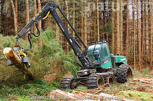 Nature Picture Library Timber Harvesting Machine Felling And