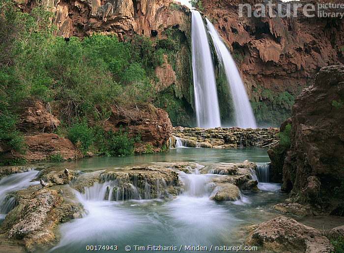 Havasu Creek which is lined with Cottonwood trees, being fed by one of its three cascades, Havasu Falls, Grand Canyon, Arizona  ,  Arizona, Blurred Motion, Cascading, Color Image, Creek, Day, Flowing, Grand Canyon, Havasu Creek, Havasu Falls, Horizontal, Landscape, Long Exposure, Nobody, Photography, Rushing, Tranquility, USA, Water,Arizona, USA,Arizona, Blurred Motion, Cascading, Color Image, Creek, Day, Flowing, Grand Canyon, Havasu Creek, Havasu Falls, Horizontal, Landscape, Long Exposure, Nobody, Photography, Rushing, Tranquility, USA, Water  ,  Tim Fitzharris