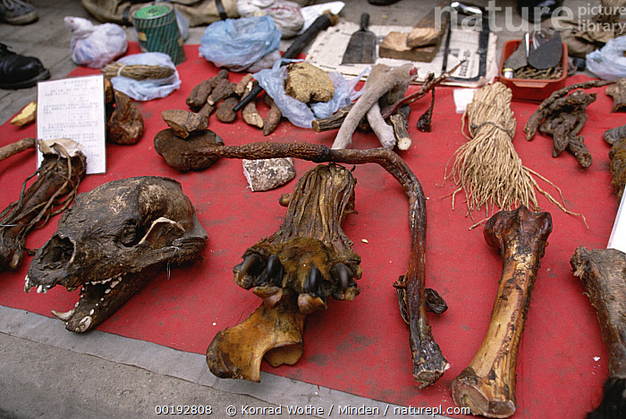 Tiger (Panthera tigris) paw and penis as a potency remedy, market in Chengdu, China, Chengdu, China, Close Up, Color Image, Endangered Species, High Angle View, Horizontal, Large Group of Objects, Market, Medicine, Nobody, Panthera tigris, Penis, Photography, Poached, Selling, Sichuan Province, Skull, Tiger, Wildlife,Tiger,China, Konrad Wothe