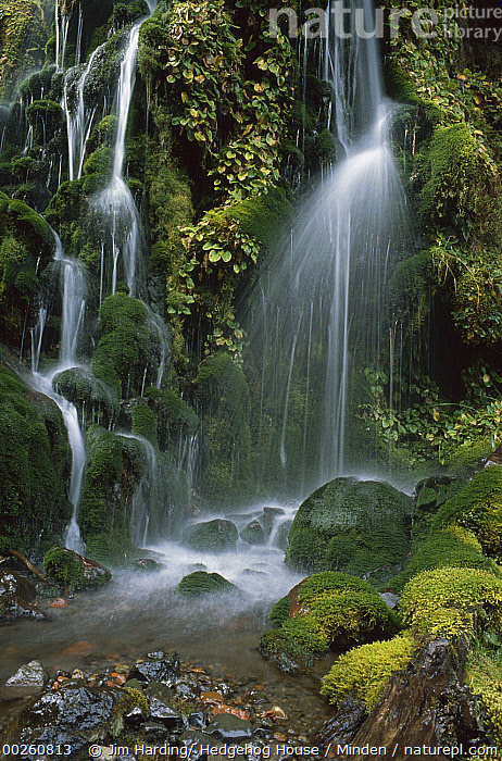 Waterfall cascading over mossy rocks, Tongariro National Park, New Zealand  ,  Cascading, Cascade, Color Image, Day, Landscape, Moss, New Zealand, Nobody, Outdoors, Photography, Time Exposure, Tongariro National Park, Vertical, Waterfall,New Zealand  ,  Jim Harding