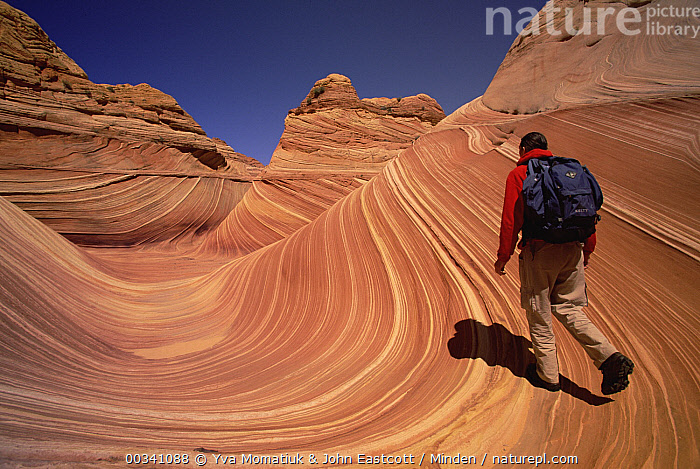 Lone hiker walking on colorful sandstone strong pattern of wavy lines in petrified sand dunes are exposed by erosion, Vermilion Cliffs National Monument, Colorado Plateau, Utah, Color Image, Colorado Plateau, Day, Dune, Ecotourism, Erosion, Full Length, Hiker, Hiking, Homo sapiens, Horizontal, Human, John Eastcott, Low Angle View, Male, Man, One Person, Outdoors, Person, Photography, Rear View, Shadow, USA, Utah, Vermilion Cliffs National Monument, , , ,Utah, USA, Yva Momatiuk & John Eastcott