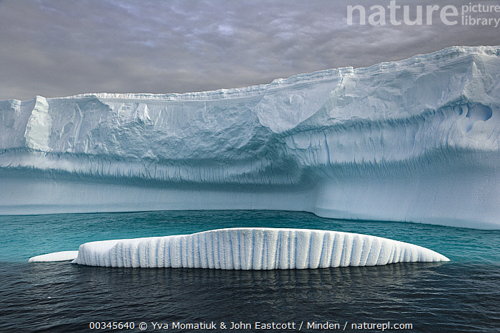 Icebergs carved by waves and melting of the ice, Grandidier Passage, western Antarctica  ,  Antarctica, Antarctic Peninsula, Color Image, Day, Floating, Grandidier Passage, Horizontal, Iceberg, Landscape, Melting, Nobody, Outdoors, Photography, Polar Climate, Sculpted, Two Objects,Antarctica  ,  Yva Momatiuk & John Eastcott