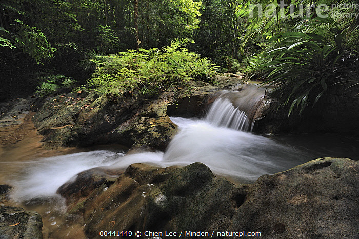 Small waterfall in rainforest interior, Lambir Hills National Park, Borneo, Malaysia, Borneo, Cascade, Color Image, Day, Horizontal, Interior, Lambir Hills National Park, Landscape, Long Exposure, Malaysia, Nobody, Outdoors, Photography, Rainforest, Time Exposure, Waterfall,Malaysia, Chien Lee