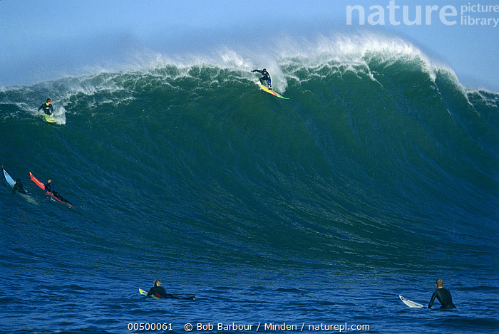 Nature Picture Library - Jay Moriarity catching a ride at ...