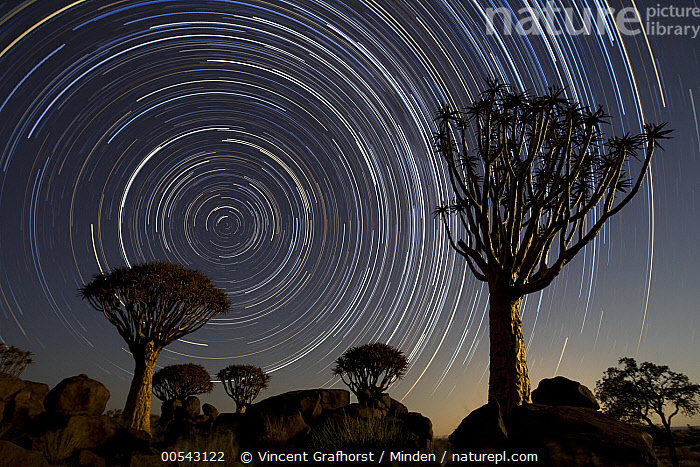 Quiver Tree (Aloe dichotoma) group and star trails, Keetmanshoop, Namibia, stacked image*, Aloe dichotoma, Circle, Color Image, Horizontal, Keetmanshoop, Landscape, Long Exposure, Mother Nature, Namibia, Night, Nobody, Outdoors, Photography, Quiver Tree, Silhouette, Sky, Star, Star Trail, Stacked Image, Time Exposure,Quiver Tree,Namibia, Vincent Grafhorst