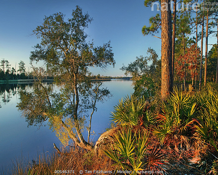 Trees near river, Ochlockonee River State Park, Florida  ,  Adult, Blue Sky, Color Image, Day, Florida, Landscape, Mother Nature, Nobody, Ochlockonee River State Park, Outdoors, Photography, Reflection, River, Square, Tree,Florida, USA,Adult, Blue Sky, Color Image, Day, Florida, Landscape, Mother Nature, Nobody, Ochlockonee River State Park, Outdoors, Photography, Reflection, River, Square, Tree  ,  Tim Fitzharris