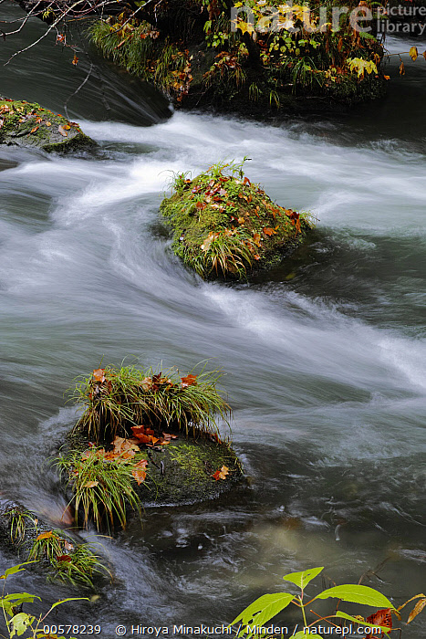 Flowing water, Oirase River, Aomori, Japan  ,  Aomori, Blurred Motion, Color Image, Day, Flower, Japan, Long Exposure, Nature, Nobody, Oirase River, Outdoors, Photography, Time Exposure, Vertical, Water  ,  Hiroya Minakuchi